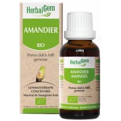 Herbalgem Amandier bio Flacon compte gouttes 50ml complément alimentaire de gemmothérapie Les Copines Bio