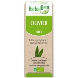 Herbalgem Gemmobase Olivier bio Flacon compte gouttes 50ml complément alimentaire Les Copines Bio